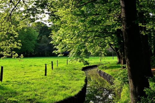 Dirk Duckhorn: Sunny meadow, 30.04.2012